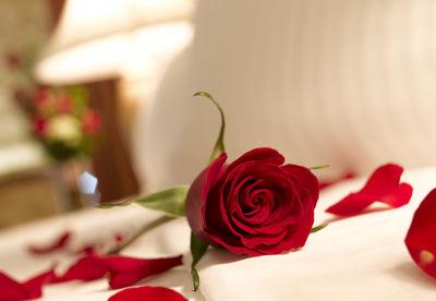 bed-rose