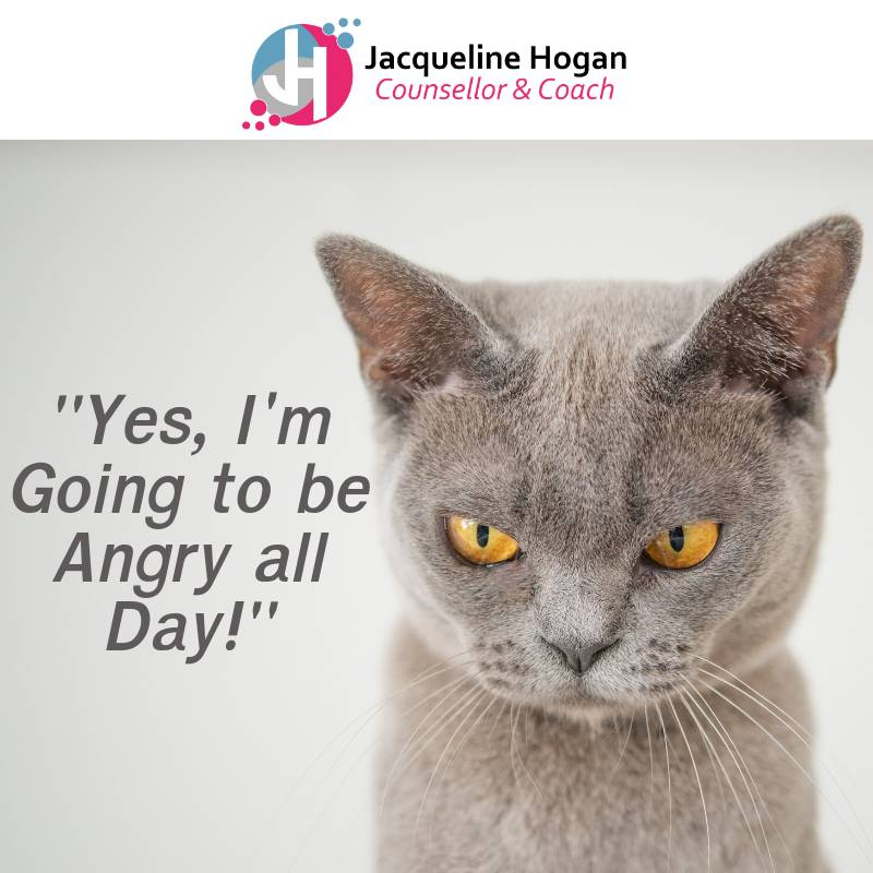 You Have Emotions - angry cat