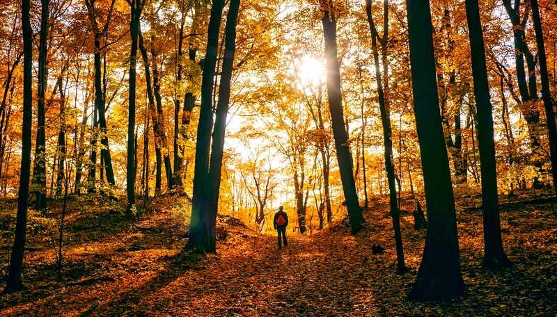 man walk forest