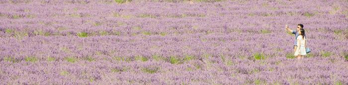 flowers couple field